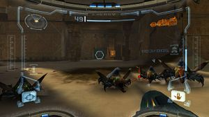 Group of Beetles.jpg