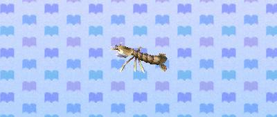 ACNL mantisshrimp.png
