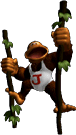 SSBM Trophy Donkey Kong Junior.png
