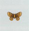 ACWW Moth.png