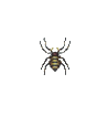 ACWW Spider.png