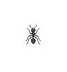 ACWW Ant.png