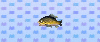 how to catch fish acnl