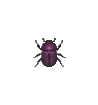 ACWW DungBeetle.png