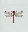 ACWW RedDragonfly.png