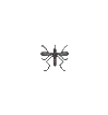 ACWW Mosquito.png