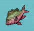 Aquaria fish-03.png