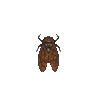 ACWW BrownCicada.png