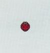 ACWW Ladybug.png