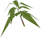 Tallon Fern mp1 Model 02.png