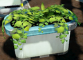 Surface Plant.png
