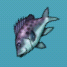 Aquaria fish-02.png