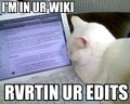 StrategyWiki Guide edit wars lolcat.jpg