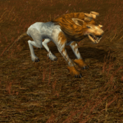 KotOR Model Kath Hound (Gold).png