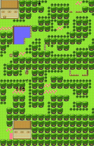 Ilex Forest
